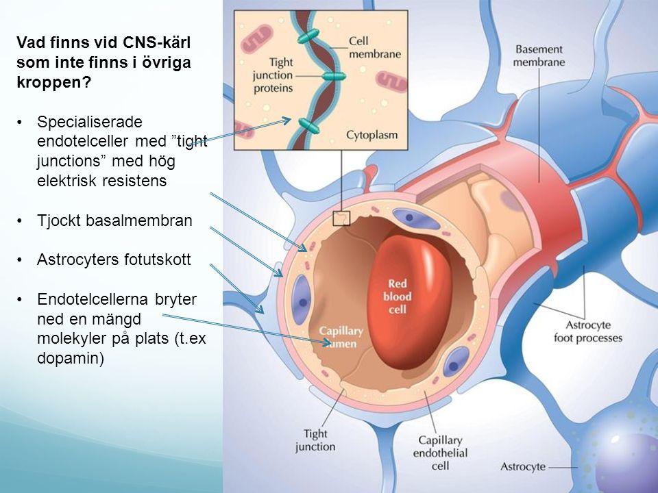"""Vad finns vid CNS-kärl som inte finns i övriga kroppen? Specialiserade endotelceller med """"tight junctions"""" med hög elektrisk resistens Tjockt basalmem"""