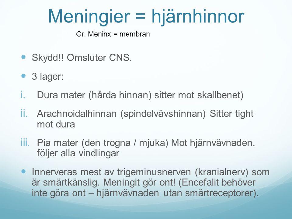 Meningier = hjärnhinnor Skydd!! Omsluter CNS. 3 lager: i. Dura mater (hårda hinnan) sitter mot skallbenet) ii. Arachnoidalhinnan (spindelvävshinnan) S