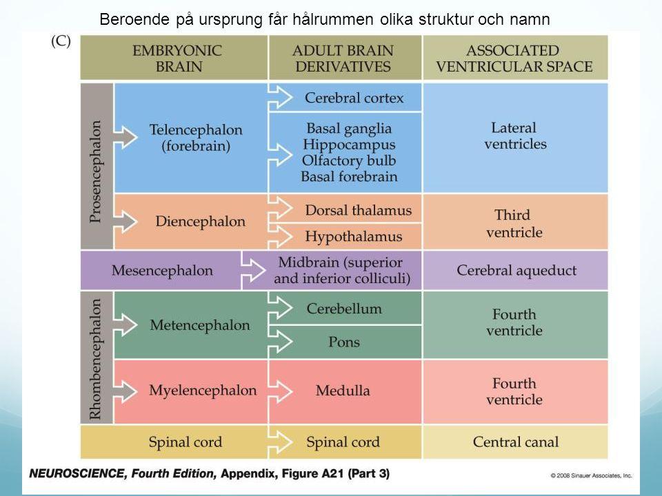 Beroende på ursprung får hålrummen olika struktur och namn