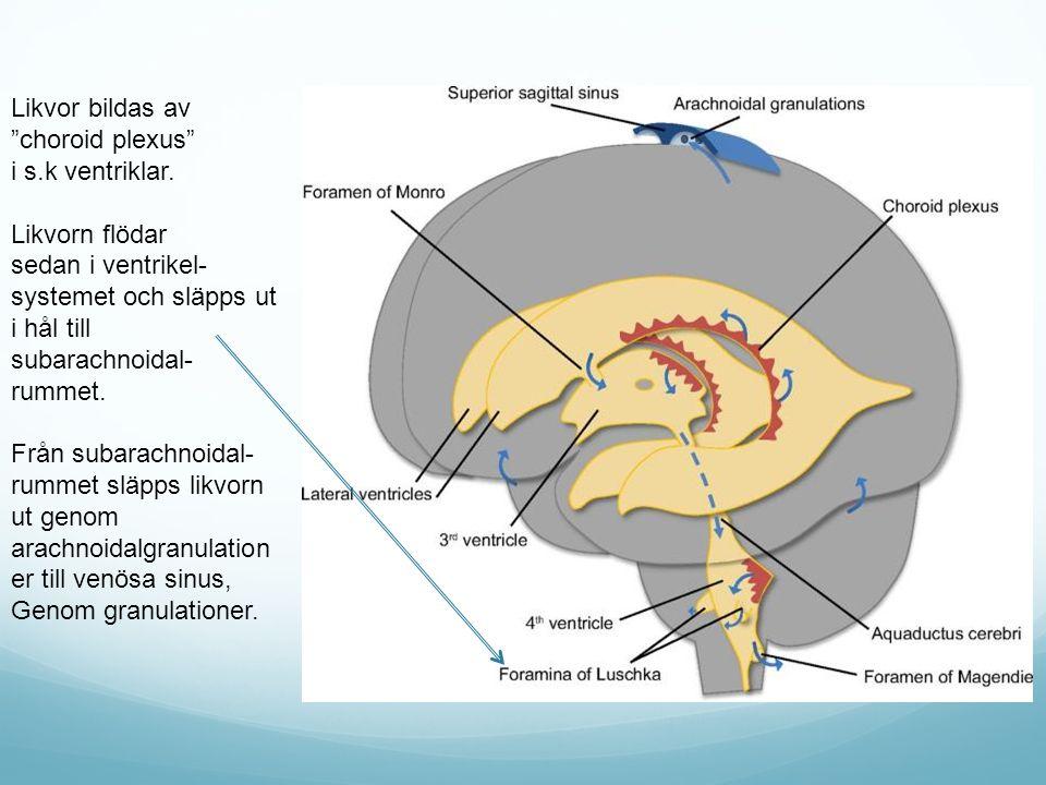 """Likvor bildas av """"choroid plexus"""" i s.k ventriklar. Likvorn flödar sedan i ventrikel- systemet och släpps ut i hål till subarachnoidal- rummet. Från s"""