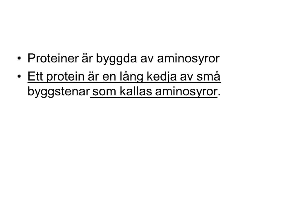 Det finns 20 olika aminosyror som kan kopplas ihop på många sätt till olika proteiner.