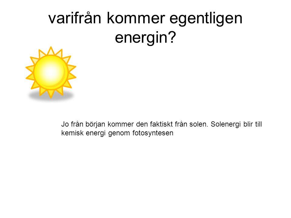 Solljus + Vatten + Koldioxid  Druvsocker + Syre