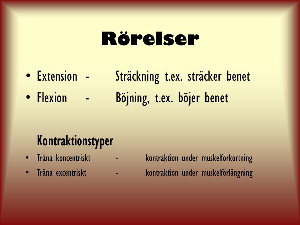 Rörelser Extension-Sträckning t.ex.sträcker benet Flexion-Böjning, t.ex.