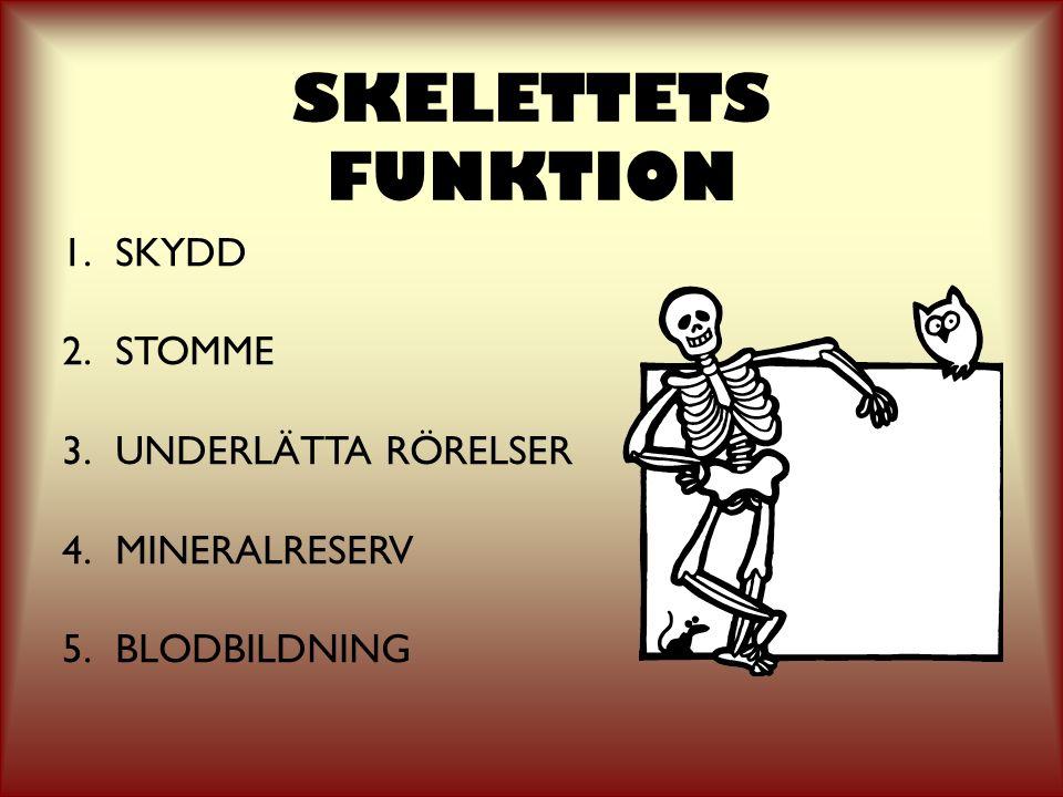 SKELETTETS FUNKTION 1.SKYDD 2.STOMME 3.UNDERLÄTTA RÖRELSER 4.MINERALRESERV 5.BLODBILDNING
