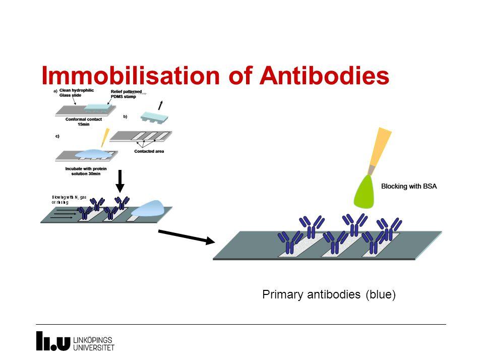Immobilisation of Antibodies Primary antibodies (blue)