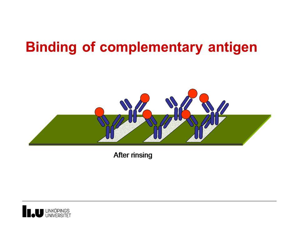 Binding of complementary antigen
