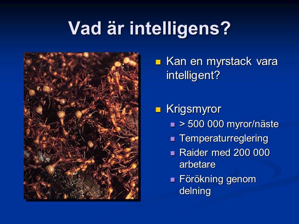 Vad är intelligens? Kan en myrstack vara intelligent? Krigsmyror > 500 000 myror/näste Temperaturreglering Raider med 200 000 arbetare Förökning genom