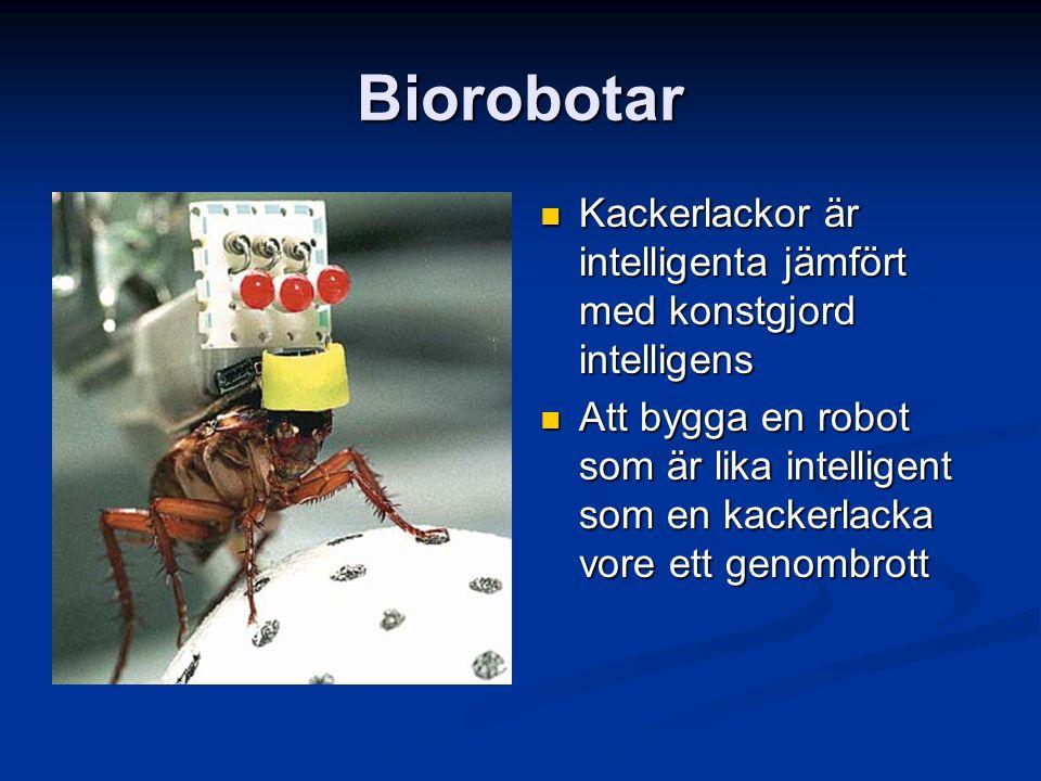 Biorobotar Kackerlackor är intelligenta jämfört med konstgjord intelligens Att bygga en robot som är lika intelligent som en kackerlacka vore ett geno