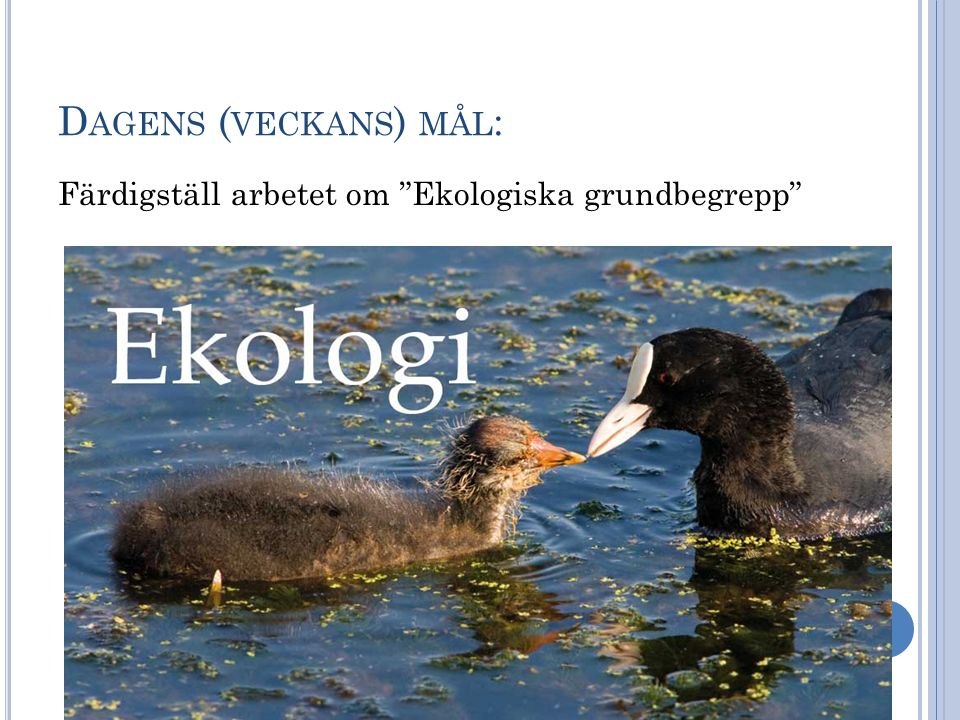 """D AGENS ( VECKANS ) MÅL : Färdigställ arbetet om """"Ekologiska grundbegrepp"""""""