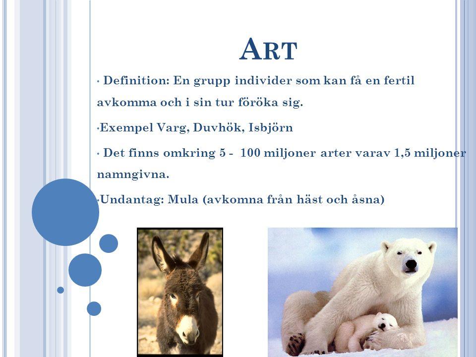 A RT Definition: En grupp individer som kan få en fertil avkomma och i sin tur föröka sig. Exempel Varg, Duvhök, Isbjörn Det finns omkring 5 - 100 mil