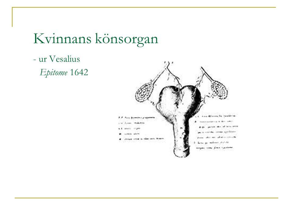 Kvinnans könsorgan - ur Vesalius Epitome 1642