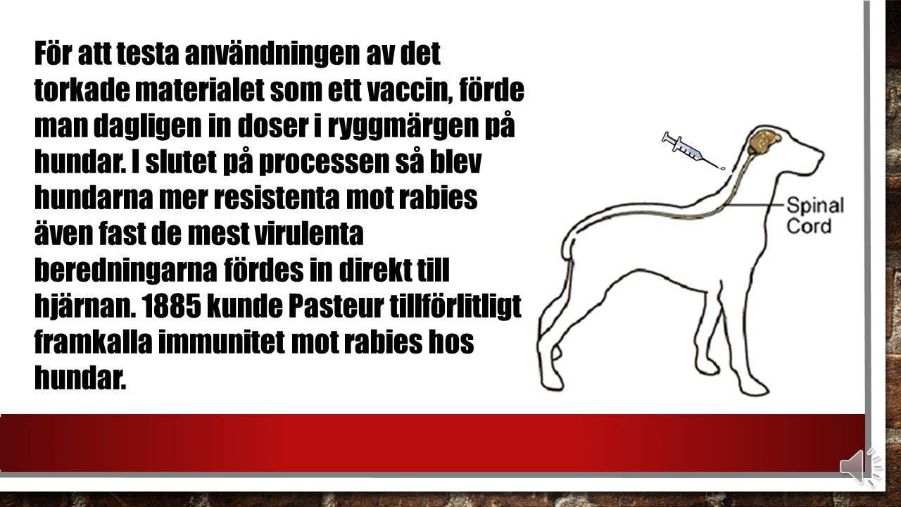 Tillslut kunde Pasteur och hans kollegor observera att när isolerad ryggmärg från ett smittat djur utsattes för ökande upprepningar av torkning, tycktes viruset succesivt bli svagare.