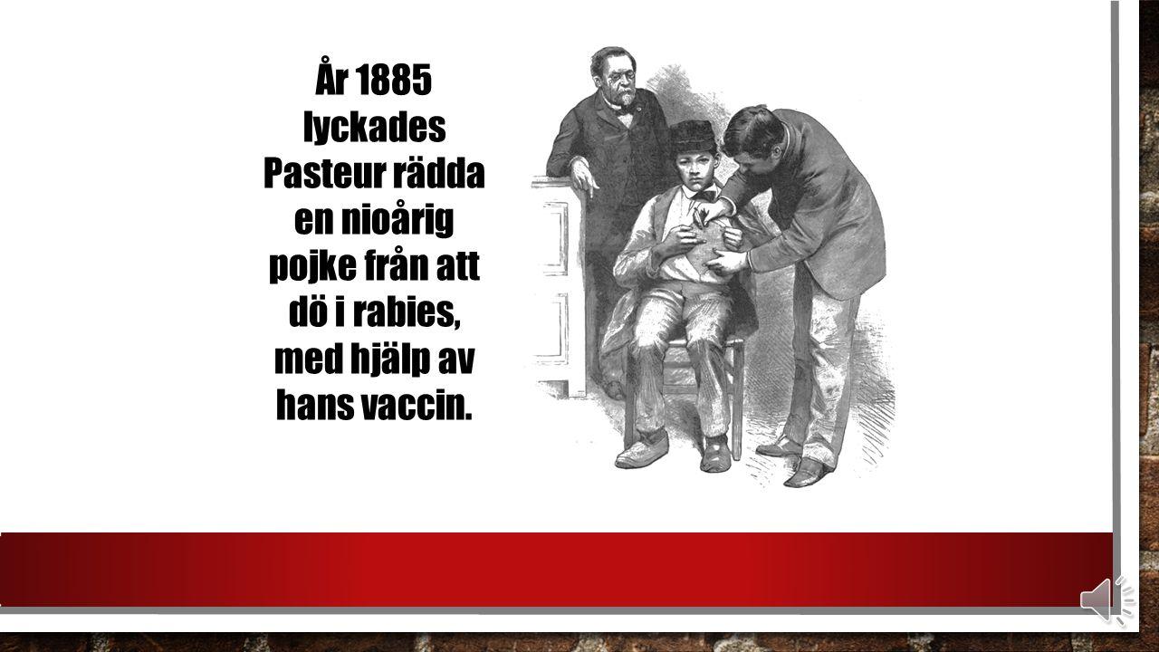 Frågan om huruvida vaccinet skulle vara effektivt hos människan kunde inte undvikas när hundarna hade fått immunitet med hjälp av Pasteurs vaccin.