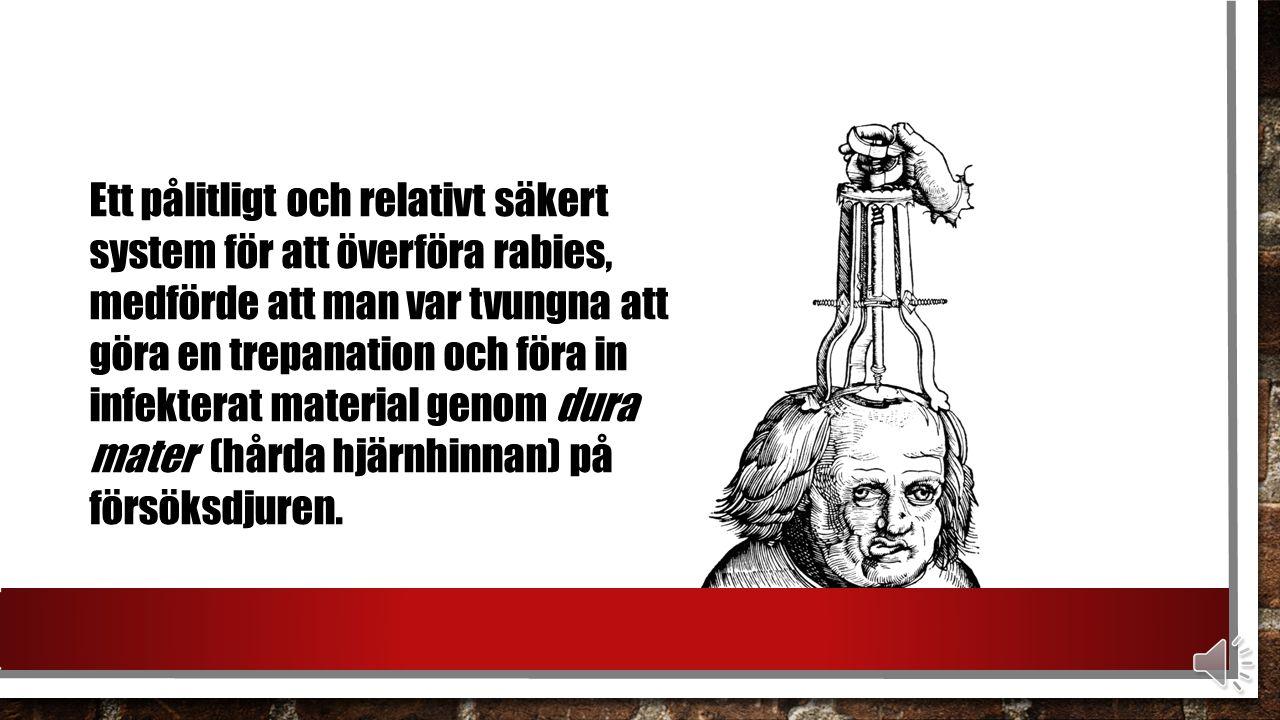 Ett pålitligt och relativt säkert system för att överföra rabies, medförde att man var tvungna att göra en trepanation och föra in infekterat material genom dura mater (hårda hjärnhinnan) på försöksdjuren.