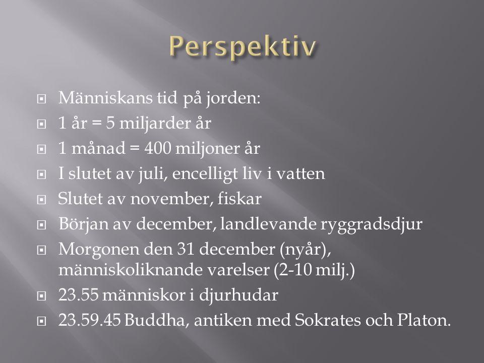  Människans tid på jorden:  1 år = 5 miljarder år  1 månad = 400 miljoner år  I slutet av juli, encelligt liv i vatten  Slutet av november, fiskar  Början av december, landlevande ryggradsdjur  Morgonen den 31 december (nyår), människoliknande varelser (2-10 milj.)  23.55 människor i djurhudar  23.59.45 Buddha, antiken med Sokrates och Platon.