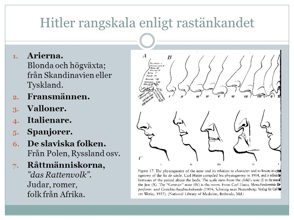 Hitler rangskala enligt rastänkandet 1. Arierna. Blonda och högväxta; från Skandinavien eller Tyskland. 2. Fransmännen. 3. Valloner. 4. Italienare. 5.