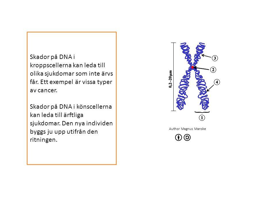 Author Magnus Manske Skador på DNA i kroppscellerna kan leda till olika sjukdomar som inte ärvs får.