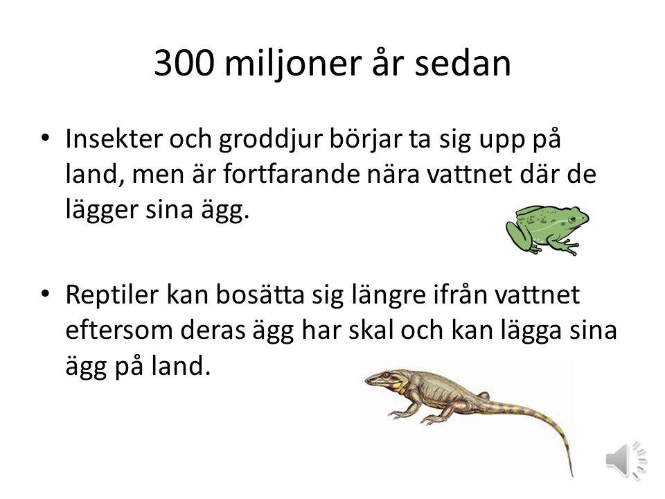 390 miljoner år sedan Under lång tid fanns livet bara i vattnet.