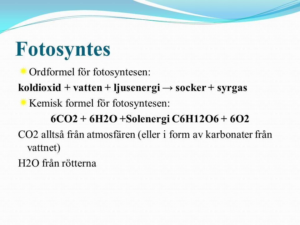 Fotosyntes  Du skall kunna beskriva fotosyntesen och förklara vad växter behöver och varför de växer.  s.218-221  Du skall kunna beskriva fotosynte