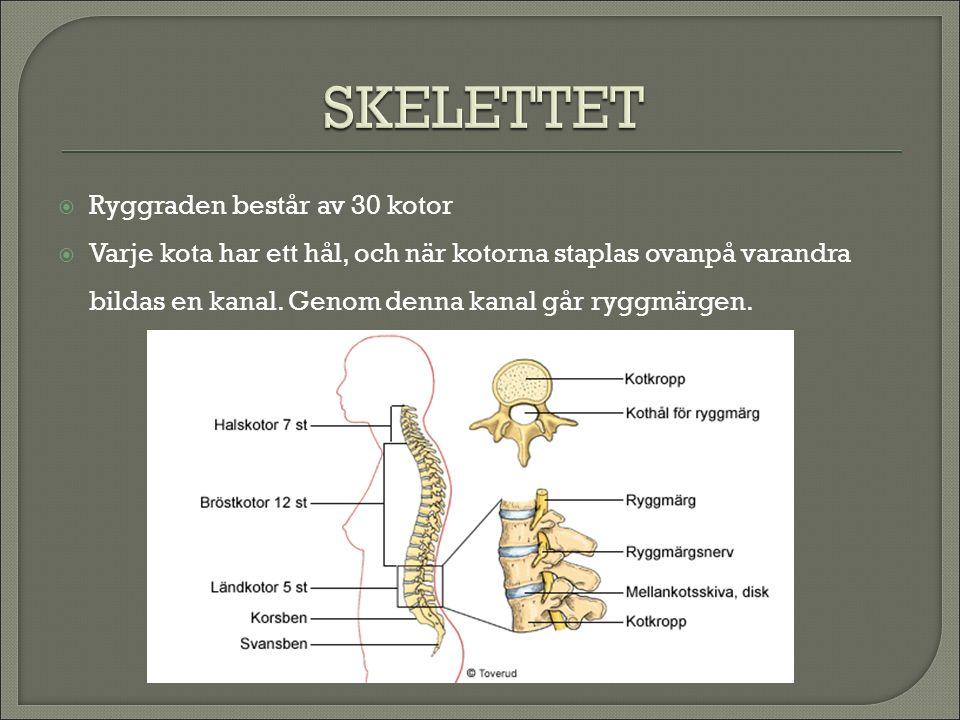  Vi har leder för att kunna böja och röra på benen  Vid lederna är skelettbenen klädda med brosk  Leden är innesluten i en kapsel och där finns en seg vätska som kallas ledvätska.