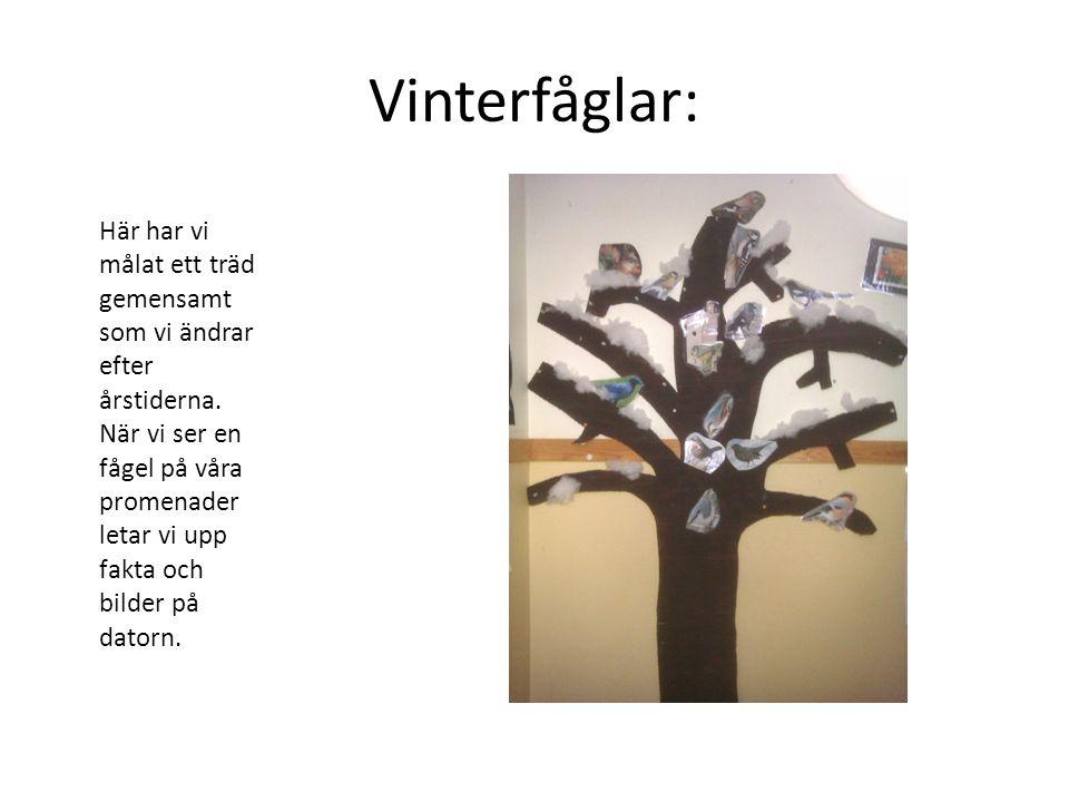 Vinterfåglar: Här har vi målat ett träd gemensamt som vi ändrar efter årstiderna. När vi ser en fågel på våra promenader letar vi upp fakta och bilder