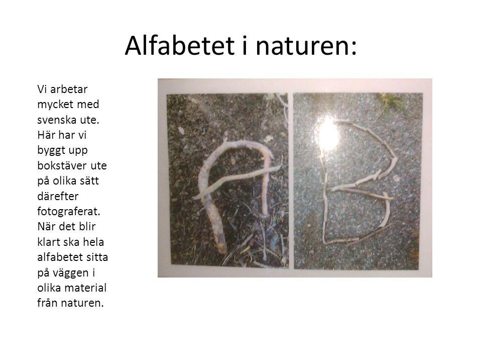 Alfabetet i naturen: Vi arbetar mycket med svenska ute. Här har vi byggt upp bokstäver ute på olika sätt därefter fotograferat. När det blir klart ska