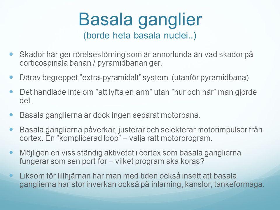 Basala ganglier (borde heta basala nuclei..) Skador här ger rörelsestörning som är annorlunda än vad skador på corticospinala banan / pyramidbanan ger
