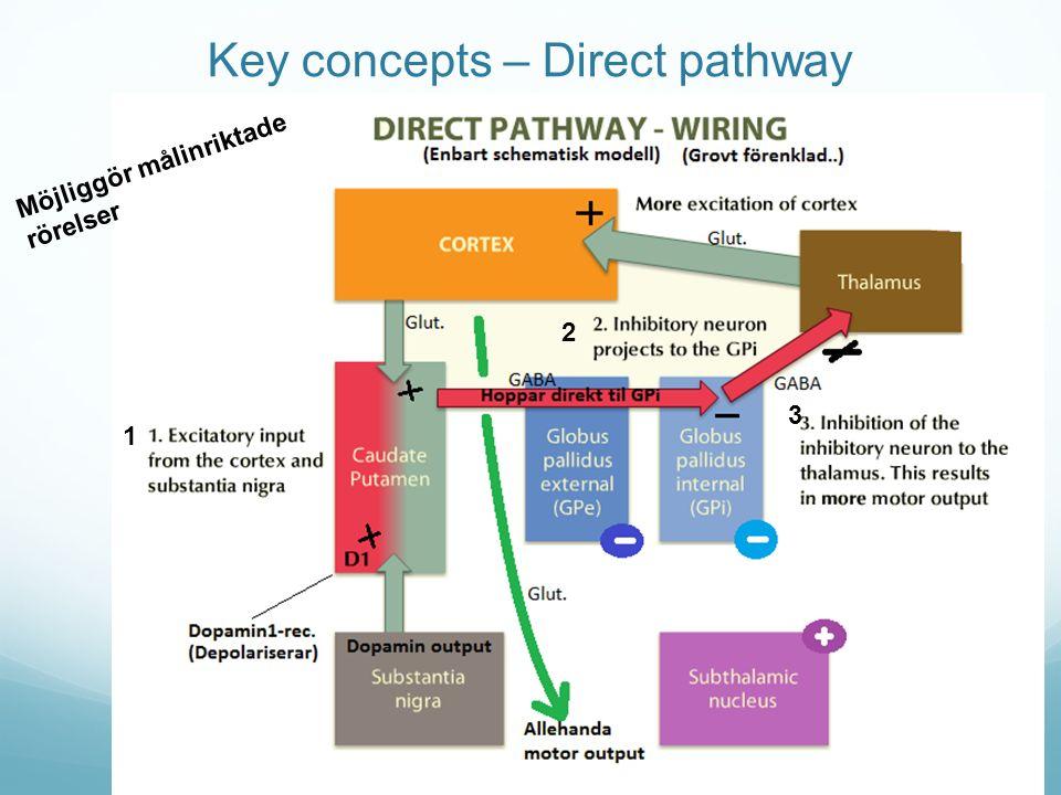 Key concepts – Direct pathway Möjliggör målinriktade rörelser 1 2 3