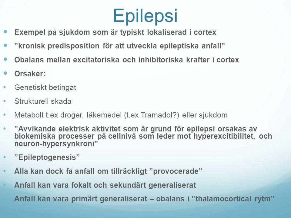 """Epilepsi Exempel på sjukdom som är typiskt lokaliserad i cortex """"kronisk predisposition för att utveckla epileptiska anfall"""" Obalans mellan excitatori"""