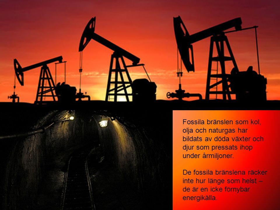 Fossila bränslen som kol, olja och naturgas har bildats av döda växter och djur som pressats ihop under årmiljoner. De fossila bränslena räcker inte h