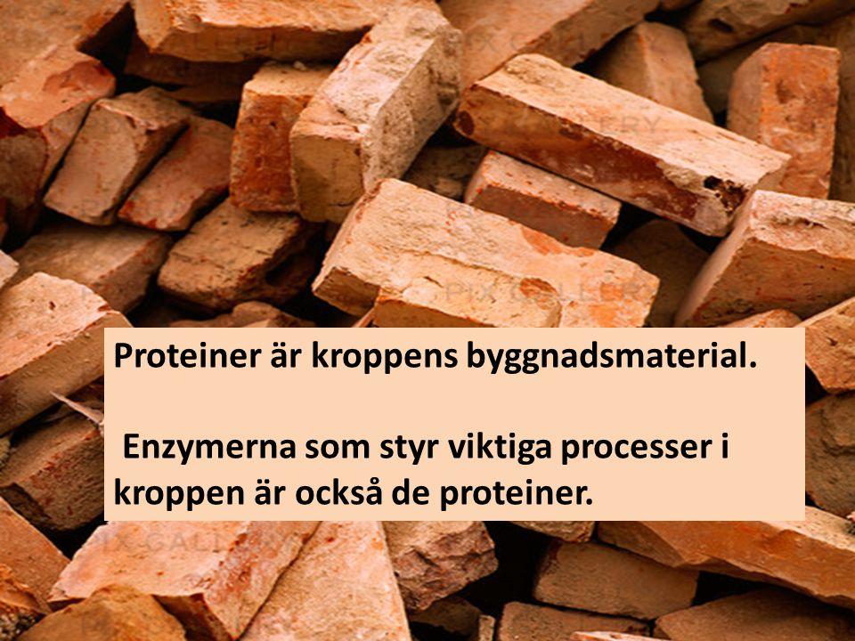 Proteiner är kroppens byggnadsmaterial. Enzymerna som styr viktiga processer i kroppen är också de proteiner.