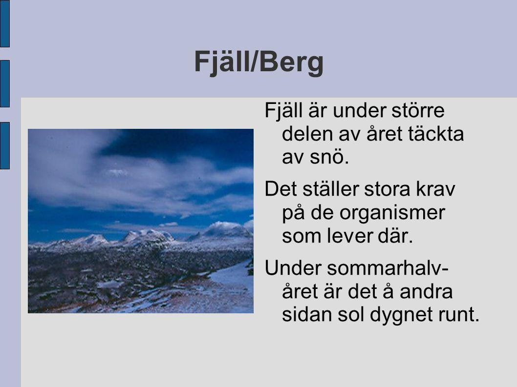 Fjäll/Berg Fjäll är under större delen av året täckta av snö. Det ställer stora krav på de organismer som lever där. Under sommarhalv- året är det å a