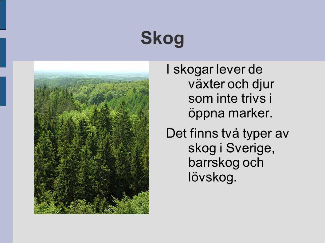 Skog I skogar lever de växter och djur som inte trivs i öppna marker. Det finns två typer av skog i Sverige, barrskog och lövskog.