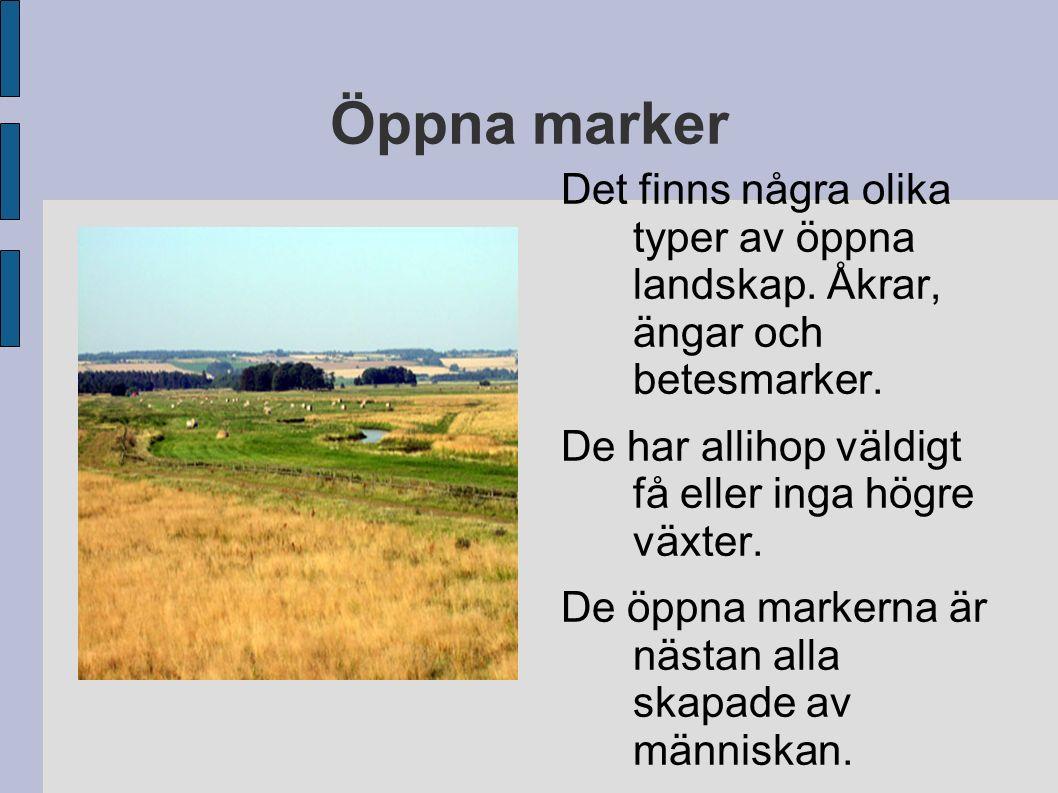 Öppna marker Det finns några olika typer av öppna landskap. Åkrar, ängar och betesmarker. De har allihop väldigt få eller inga högre växter. De öppna