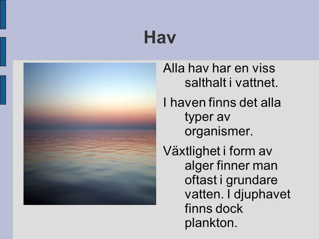 Hav Alla hav har en viss salthalt i vattnet. I haven finns det alla typer av organismer. Växtlighet i form av alger finner man oftast i grundare vatte