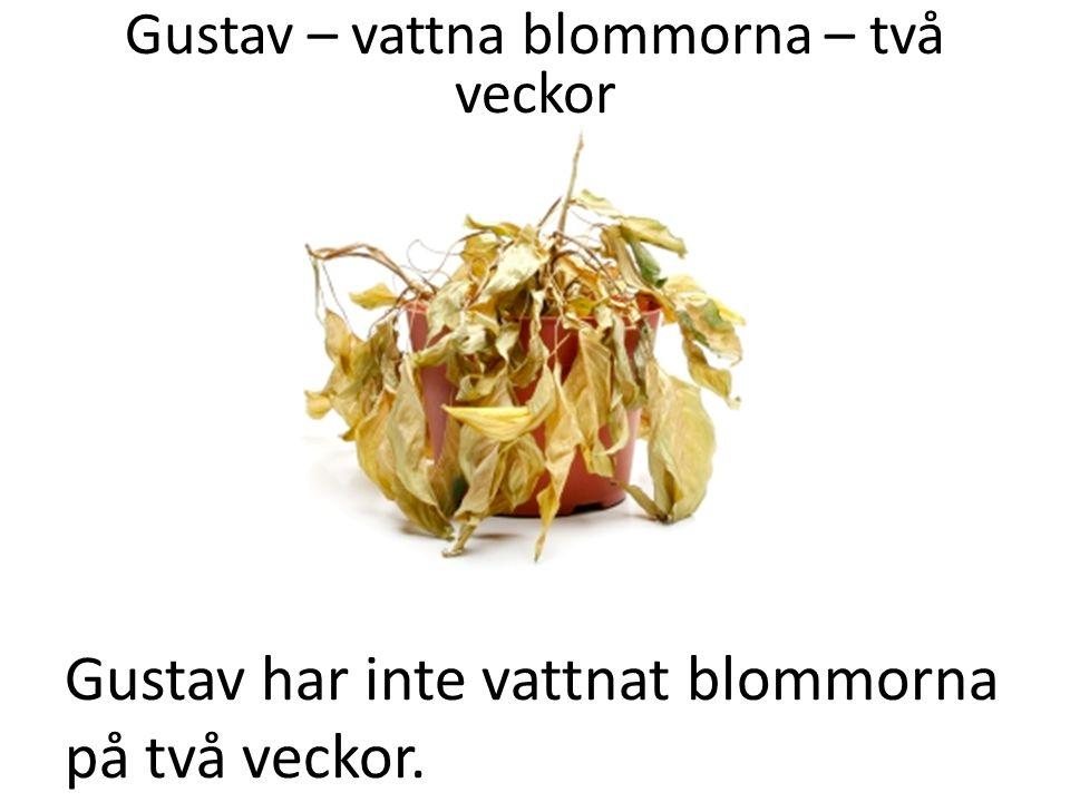 Gustav har inte vattnat blommorna på två veckor. Gustav – vattna blommorna – två veckor