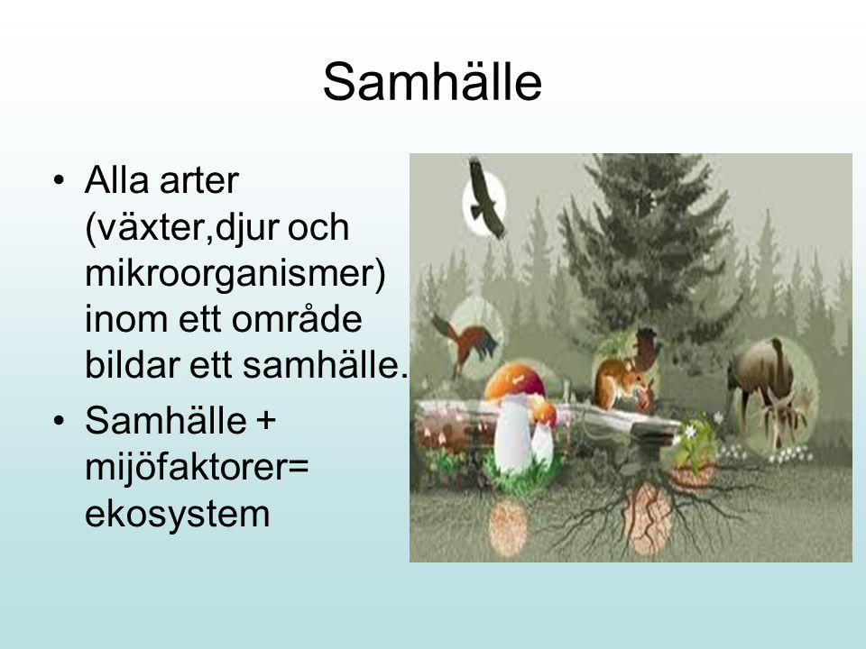 Samhälle Alla arter (växter,djur och mikroorganismer) inom ett område bildar ett samhälle.