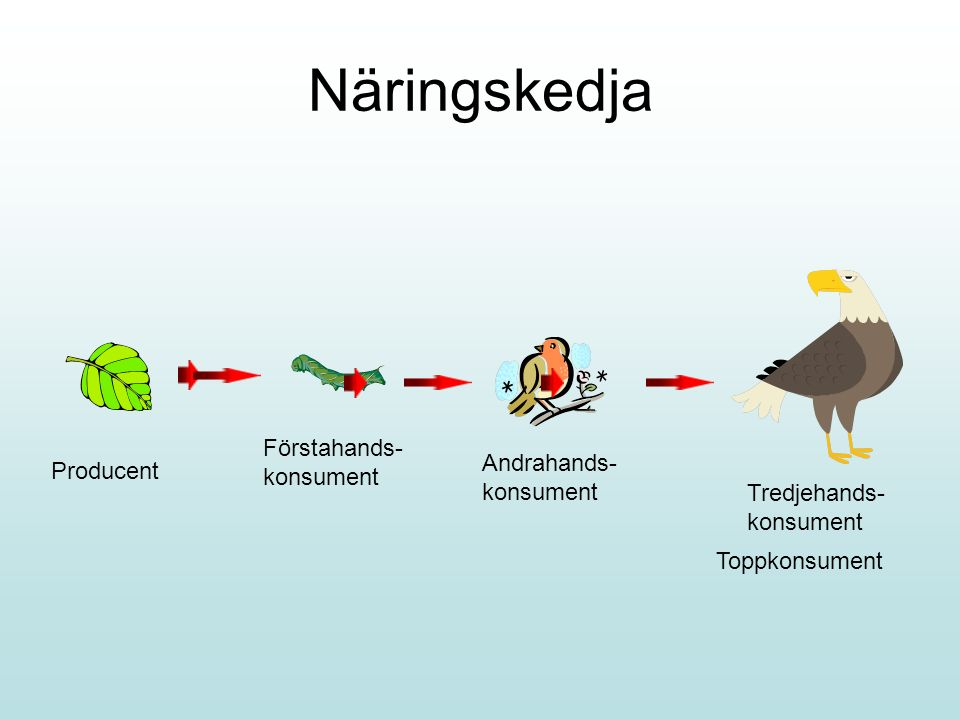 Näringskedja Producent Förstahands- konsument Andrahands- konsument Tredjehands- konsument Toppkonsument