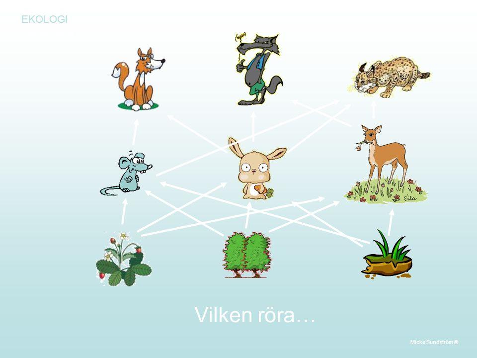EKOLOGI Närningskedja Vilken röra… Micke Sundström ©