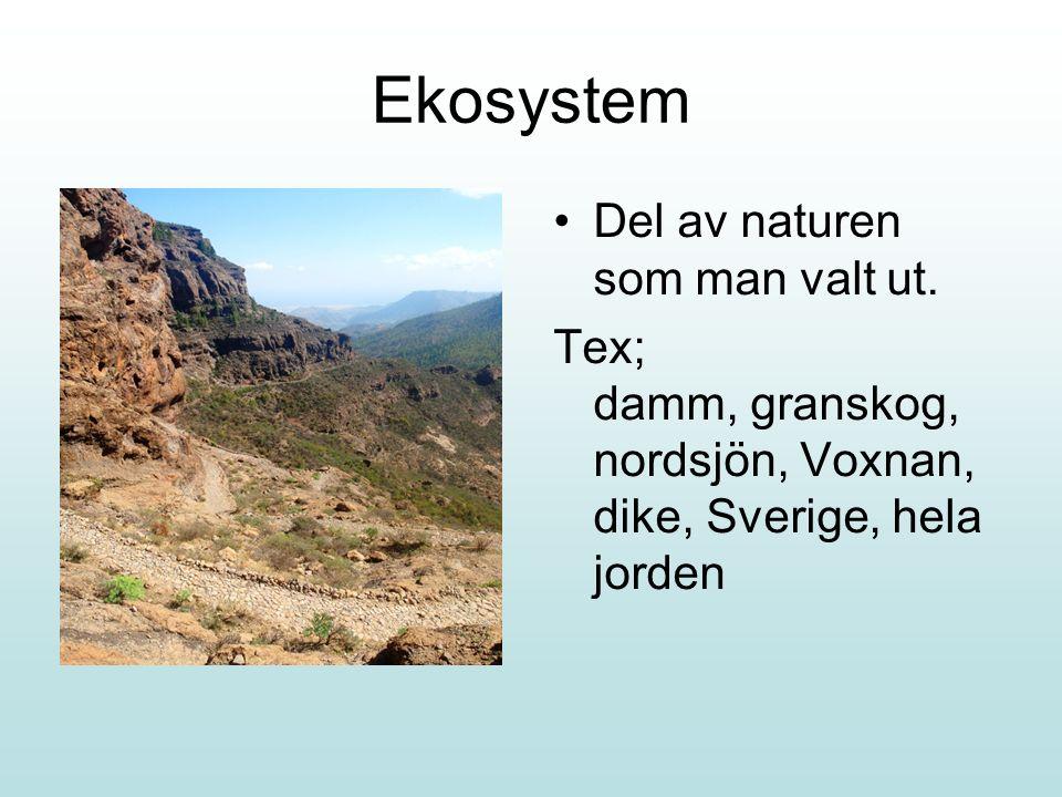 Ekosystem Del av naturen som man valt ut.