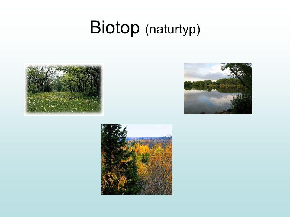 Biotop (naturtyp)