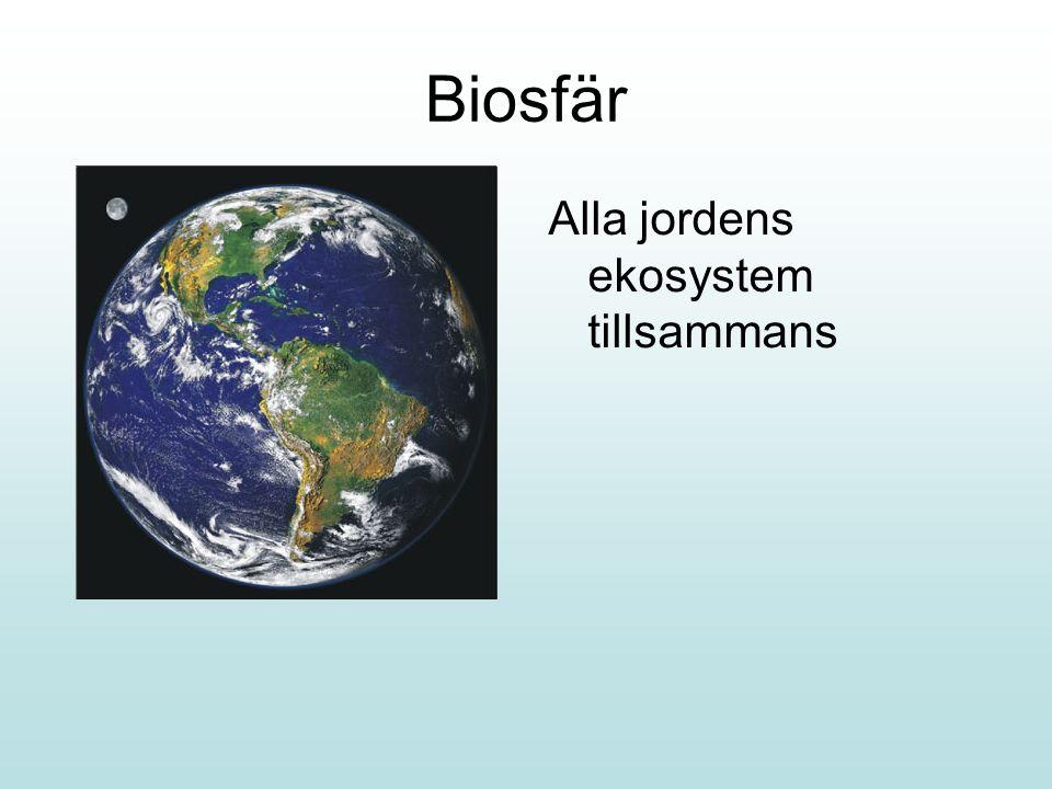 Biosfär Alla jordens ekosystem tillsammans