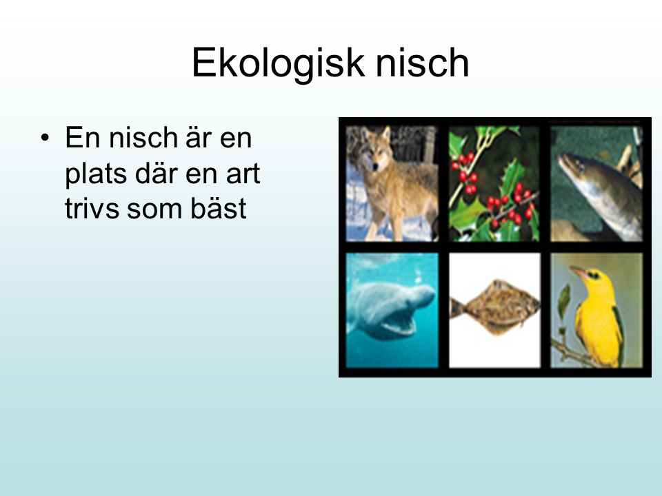 Ekologisk nisch En nisch är en plats där en art trivs som bäst