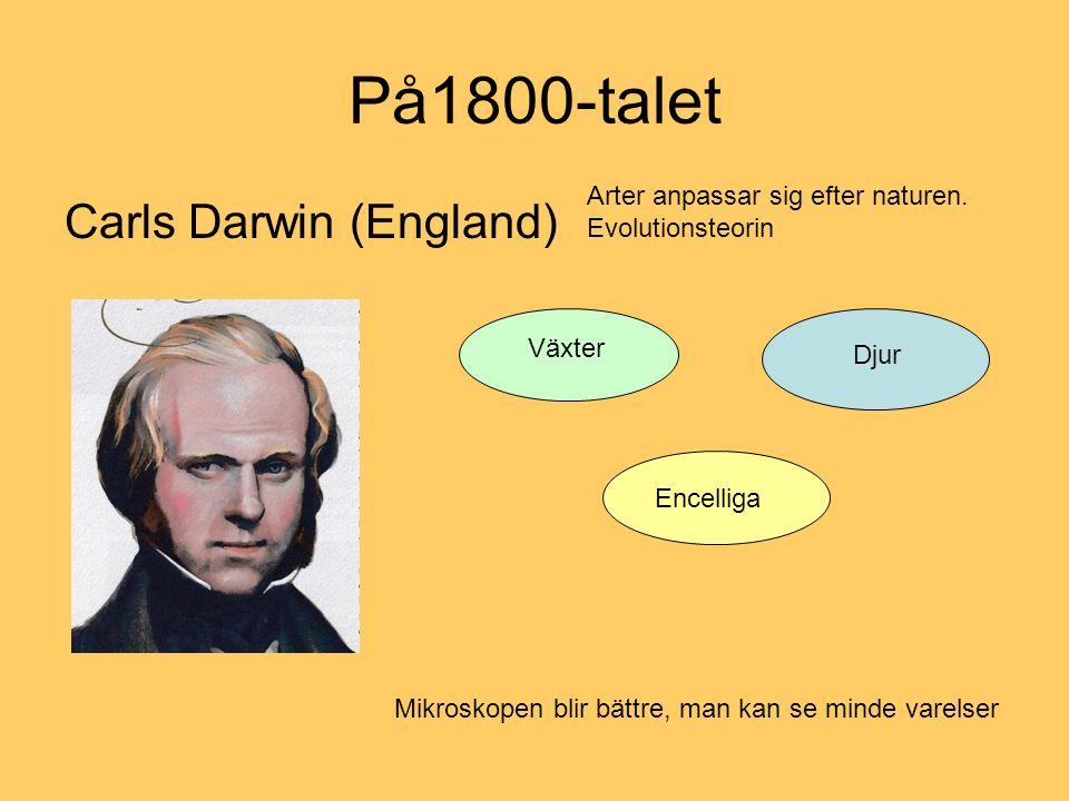 På1800-talet Carls Darwin (England) Arter anpassar sig efter naturen. Evolutionsteorin Växter Djur Encelliga Mikroskopen blir bättre, man kan se minde