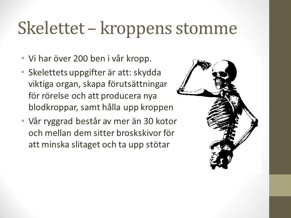 Skelettet – kroppens stomme Vi har över 200 ben i vår kropp. Skelettets uppgifter är att: skydda viktiga organ, skapa förutsättningar för rörelse och