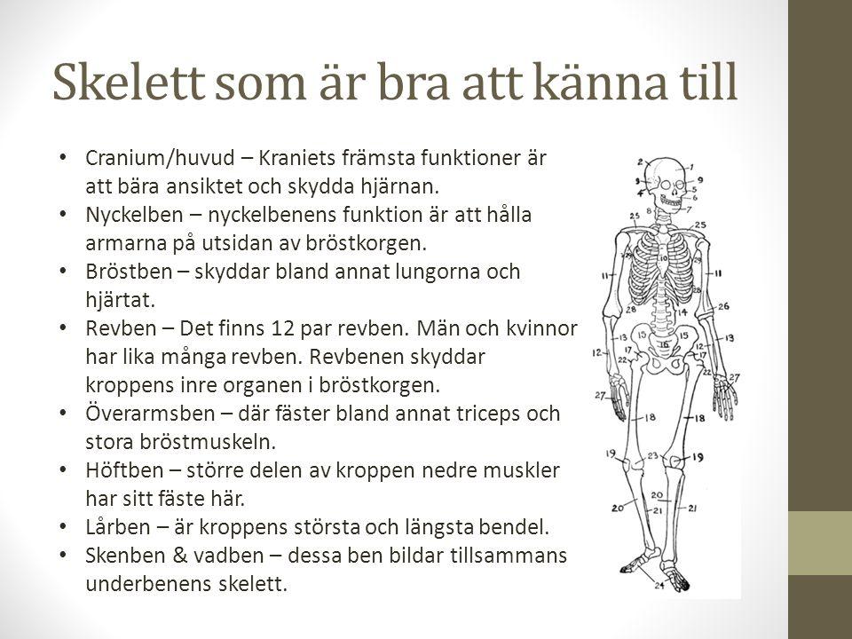 Skelett som är bra att känna till Cranium/huvud – Kraniets främsta funktioner är att bära ansiktet och skydda hjärnan. Nyckelben – nyckelbenens funkti