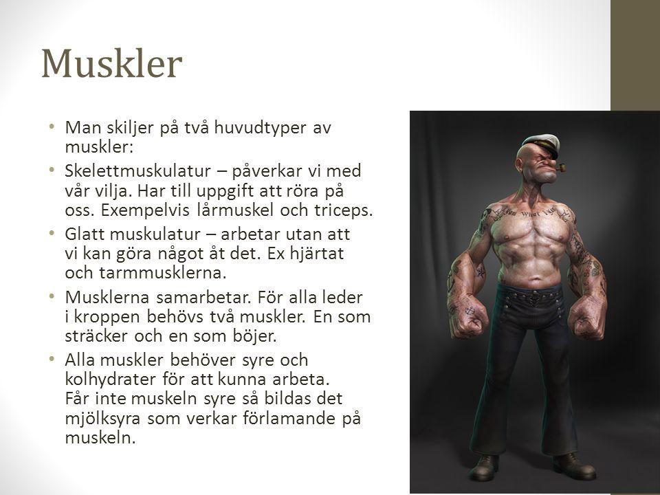 Muskler Man skiljer på två huvudtyper av muskler: Skelettmuskulatur – påverkar vi med vår vilja. Har till uppgift att röra på oss. Exempelvis lårmuske