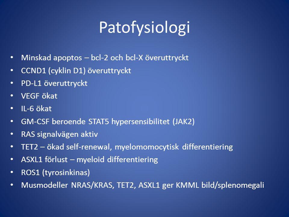 Patofysiologi Minskad apoptos – bcl-2 och bcl-X överuttryckt CCND1 (cyklin D1) överuttryckt PD-L1 överuttryckt VEGF ökat IL-6 ökat GM-CSF beroende STAT5 hypersensibilitet (JAK2) RAS signalvägen aktiv TET2 – ökad self-renewal, myelomomocytisk differentiering ASXL1 förlust – myeloid differentiering ROS1 (tyrosinkinas) Musmodeller NRAS/KRAS, TET2, ASXL1 ger KMML bild/splenomegali