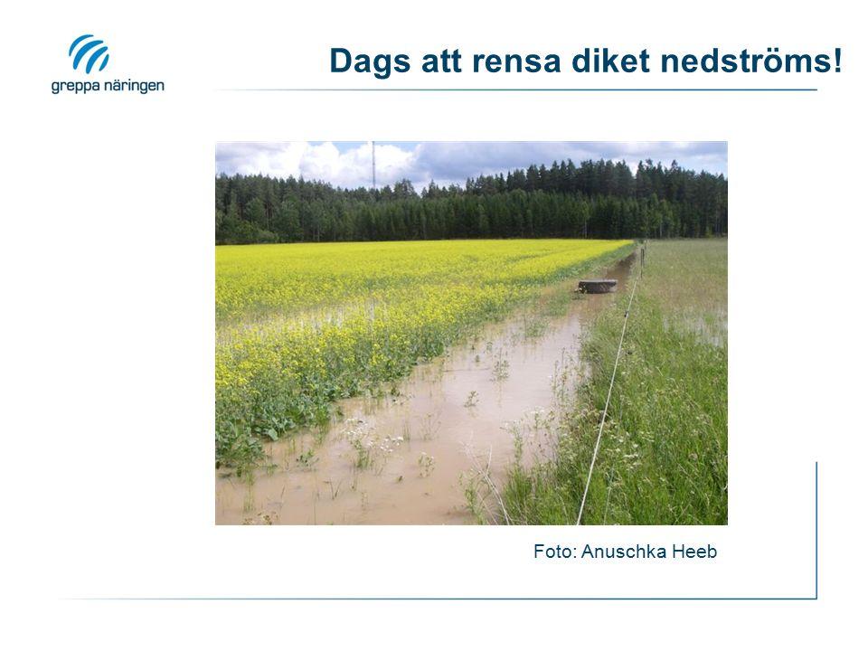Dags att rensa diket nedströms! Foto: Anuschka Heeb