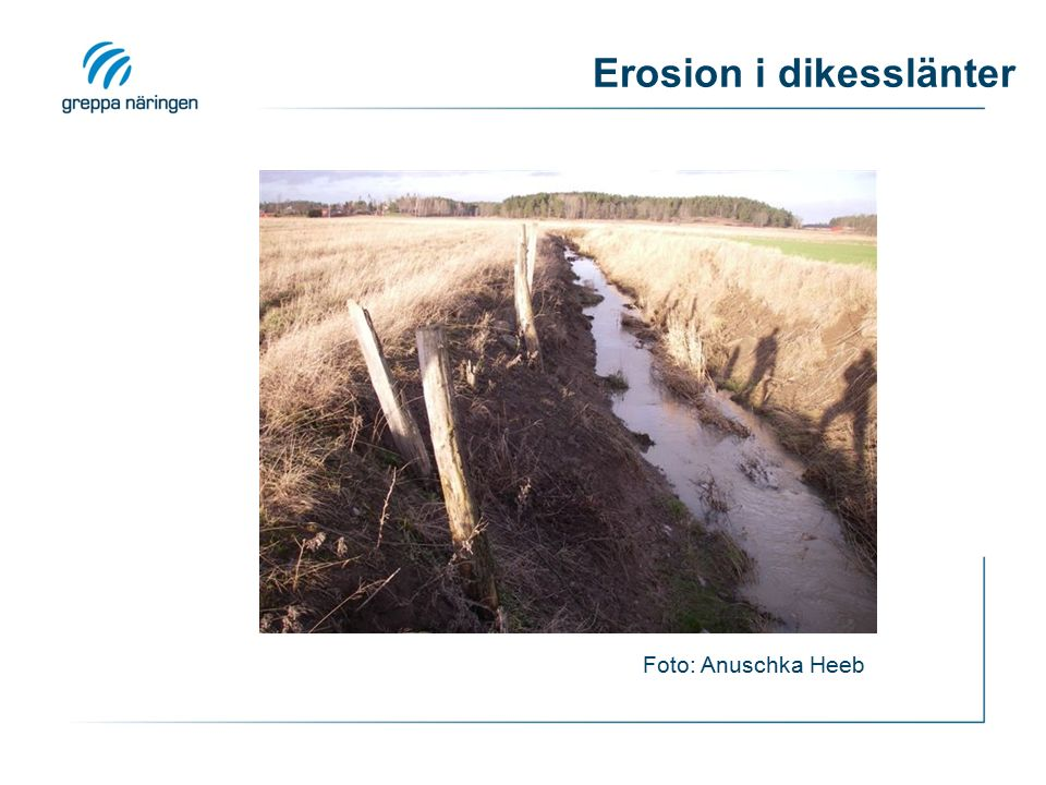 Erosion i dikesslänter Foto: Anuschka Heeb